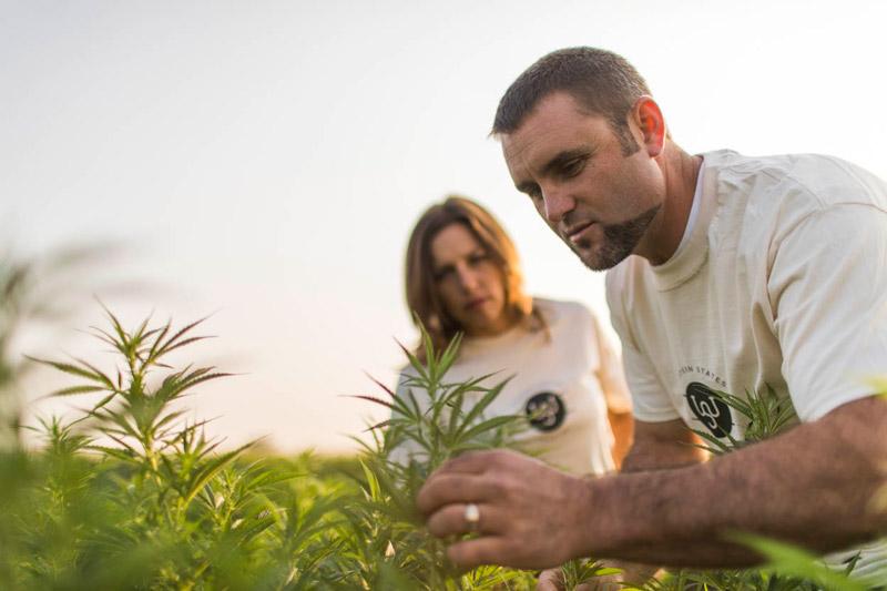 farmers inspecting hemp plants