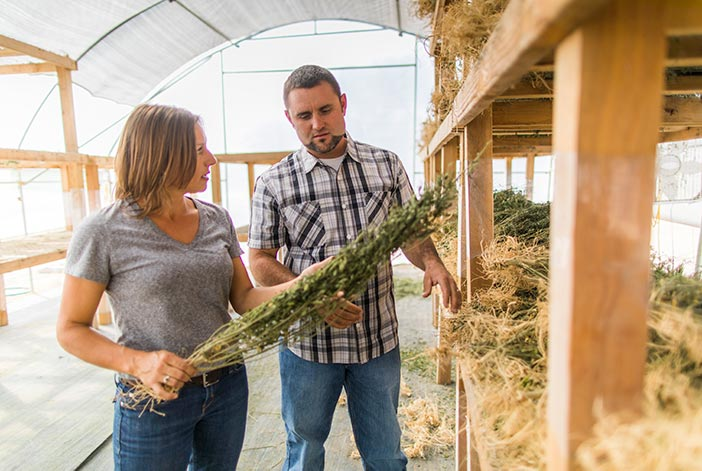 farmers reviewing hemp products